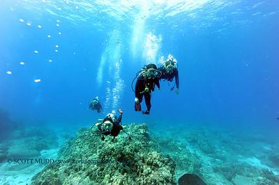 divers turtleheaven7 101116tues