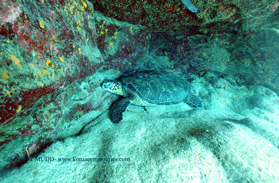 greenseaturtle turtleheaven 101016mon
