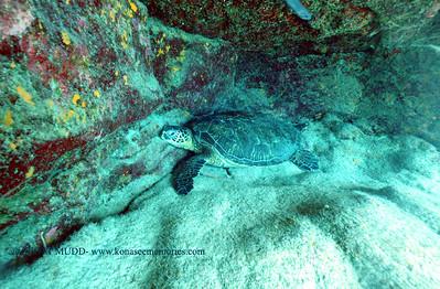 greenseaturtle turtleheaven 101016mon