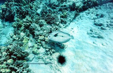 flounder turtleheaven3 101016mon