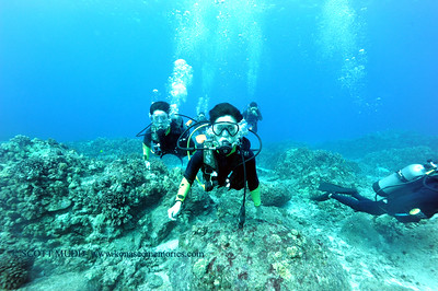 divers turtleheaven6 100416tues
