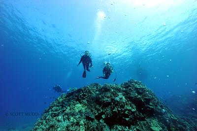 divers turtleheaven6 101116tues
