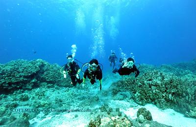 divers turtleheaven8 100416tues