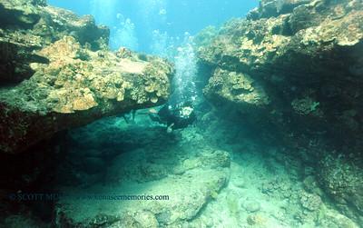 divers turtleheaven2 100416tues