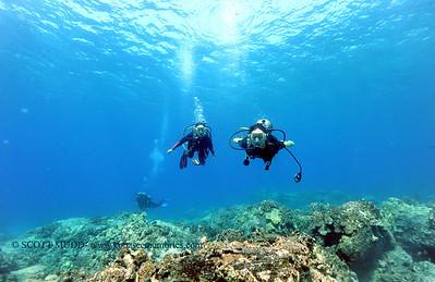 divers turtleheaven3 101116tues