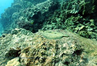 flounder turtleheaven3 100416tues