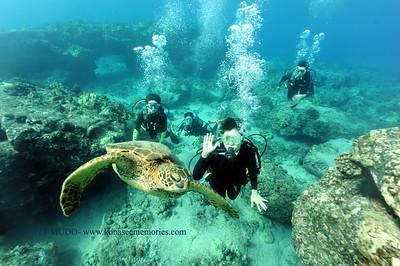 divers turtle turtleheaven 100416tues