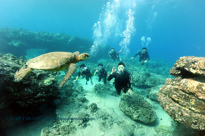 divers turtle2 turtleheaven 100416tues