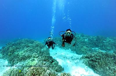 divers turtleheaven4 101116tues