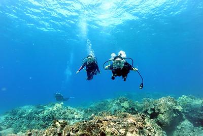 divers turtleheaven2 101116tues
