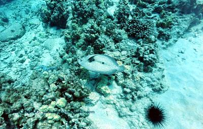 flounder turtleheaven2 101016mon