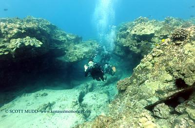 divers turtleheaven 100416tues