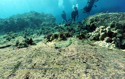 flounder turtleheaven 100416tues