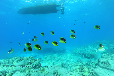raccoonbutterflyfish turtleheaven 111716thurs