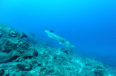 greatbarracuda naiabay6 110116tues