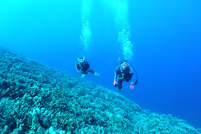 divers theshute 113016wed