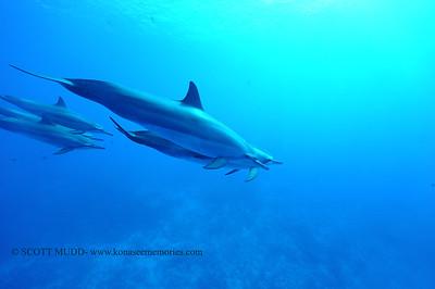 spinnerdolphins turtleheaven7 111716thurs