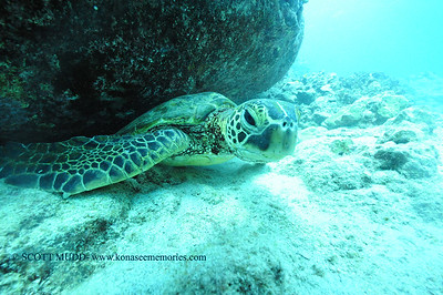 greenseaturtle turtleheaven7 120116thurs