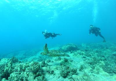 divers turtle turtleheaven6 120116thurs
