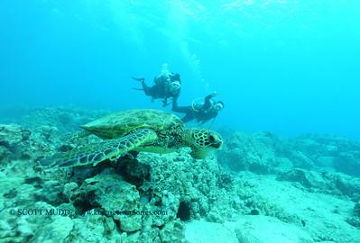 divers turtle turtleheaven3 120116thurs