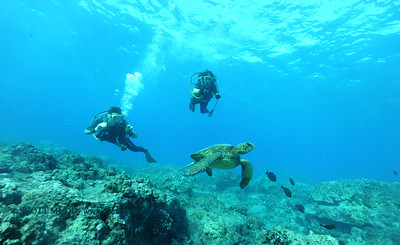 divers turtle turtleheaven4 120316sat