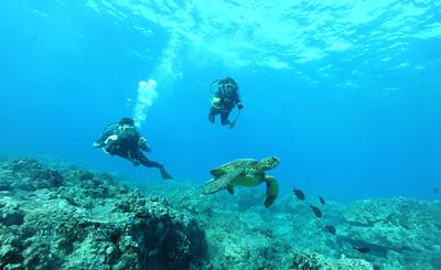 divers turtle turtleheaven4 120316sat