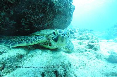 greenseaturtle turtleheaven6 120116thurs