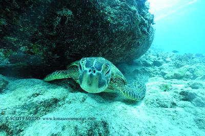 greenseaturtle turtleheaven9 120116thurs