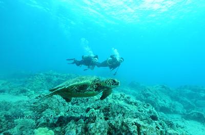 divers turtle turtleheaven4 120116thurs