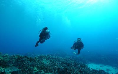 divers turtleheaven 120116thurs