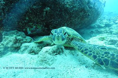 greenseaturtle turtleheaven4 120116thurs
