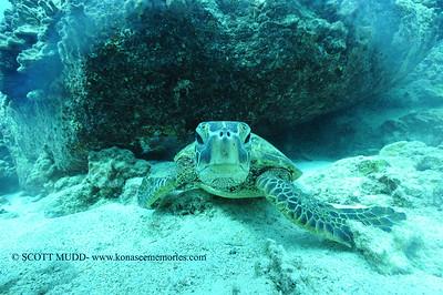 greenseaturtle turtleheaven2 120116thurs