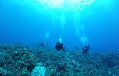 divers turtleheaven5 120116thurs