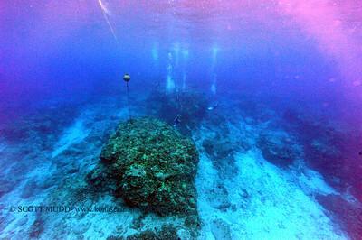 divers turtle turtleheaven7 120116thurs