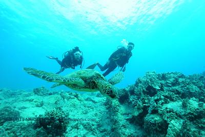 divers turtle turtleheaven 120116thurs