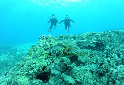 divers turtle turtleheaven5 120116thurs