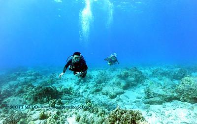 divers naiabay 120316sat