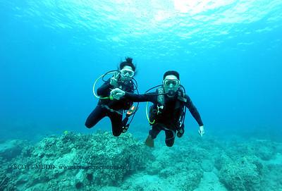 divers turtleheaven2 120116thurs