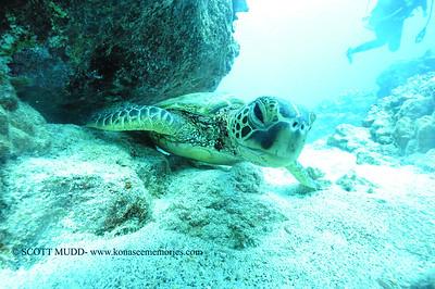 greenseaturtle turtleheaven5 120116thurs