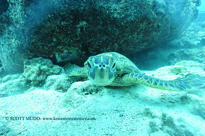 greenseaturtle turtleheaven3 120116thurs