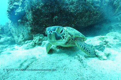 greenseaturtle turtleheaven 120116thurs
