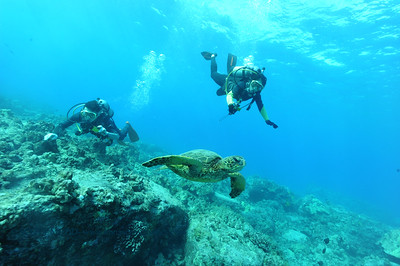 divers turtle turtleheaven 120316sat