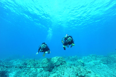divers turtleheaven 120316sat