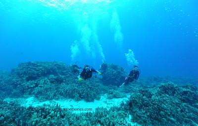 divers turtleheaven4 120116thurs