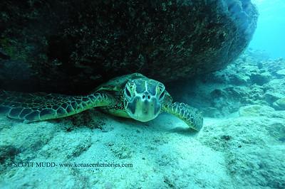 greenseaturtle turtleheaven8 120116thurs