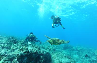 divers turtle turtleheaven3 120316sat
