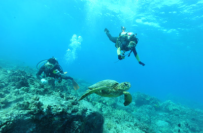divers turtle turtleheaven2 120316sat