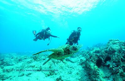 divers turtle turtleheaven2 120116thurs