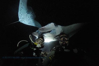 divers mantas3 keauhou 020116mon