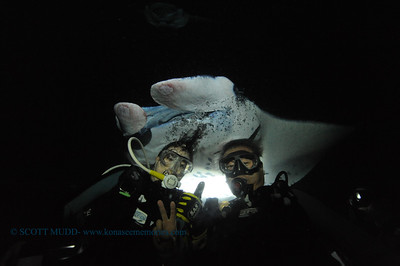 divers manta 25  keauhou 020116mon